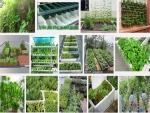 Hướng dẫn trồng rau sạch tại nhà trong thùng xốp đơn giản