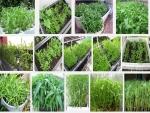 Mách bạn cách trồng rau muống sạch tại nhà xanh mơn mởn