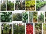 Hướng dẫn kỹ thuật ươm trồng cây Giổi Xanh