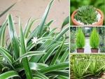 Top 10 loại cây trồng chậu giúp thanh lọc không khí nhà, văn phòng trên Nông Nghiệp Nhanh