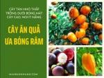Các cây ăn quả ưa bóng râm, mang lại hiệu quả kinh tế kép