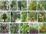 Hướng dẫn kỹ thuật trồng Dừa Xiêm xanh lùn