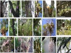 Kỹ thuật trồng lan rừng đúng cách, cho lan nở hoa