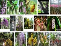 Cách thuần dưỡng lan rừng cho người chơi lan