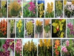 Kỹ thuật trồng và chăm sóc hoa địa lan châu Á