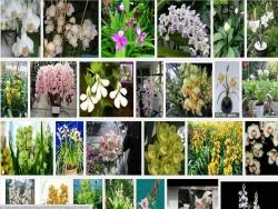 Phương pháp kích thích địa lan ra hoa theo ý muốn