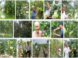 Hướng dẫn kỹ thuật trồng Cam Xoàn