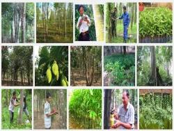 Kỹ thuật trồng và cấy tạo trầm hương
