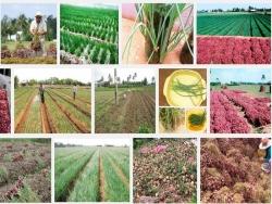 Kỹ thuật trồng cây Hành tím