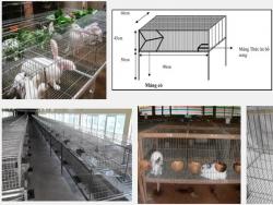 Hướng dẫn kỹ thuật làm chuồng nuôi thỏ
