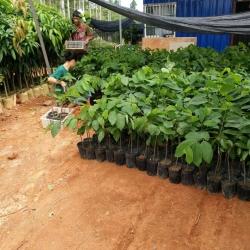 Kỹ thuật trồng, chăm sóc cây na bở, mãng cầu Đài Loan cho năng suất cao bà con nên biết