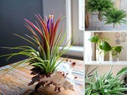 Nông Nghiệp Nhanh tư vấn cây trồng trong nhà dễ sống cho không gian nhà