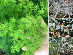 Làm kinh tế từ trồng cây phụ liệu cắm hoa tư vấn từ Nông Nghiệp Nhanh