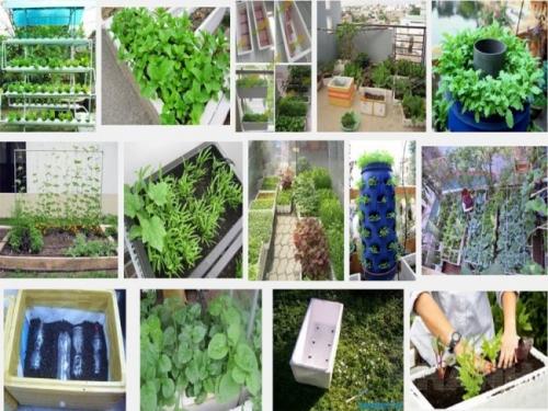 Cách trồng rau sạch tại nhà thì trồng bằng chậu xốp là đơn giản và dễ thực hiện nhất.