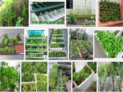 Hướng dẫn trồng rau sạch tại nhà trong thùng xốp đơn giản, 1, Mai Tâm, Nông Nghiệp Nhanh, 15/10/2016 12:03:23