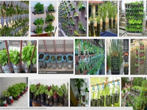 Bằng những chiếc chai nhựa cũ, bạn có thể tự tay tạo ra những vườn rau sạch xanh mát và an toàn