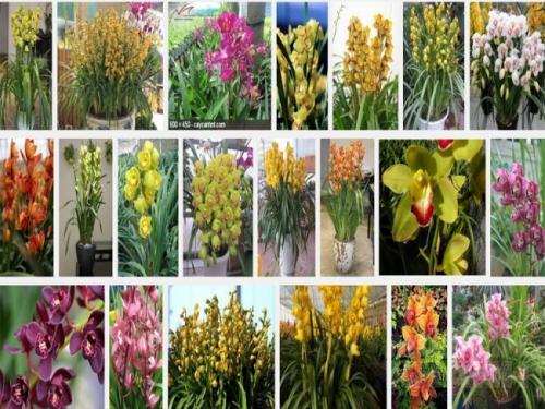 Trong việc trồng địa lan Châu Á, cho dù nó được trồng trong nhà kính, trồng dưới ánh đèn hoặc bên ngoài khí hậu ôn hoà, cần phải có sự quan tâm đặc biệt đến chất trồng, chậu trồng cây và các điều kiện phát triển