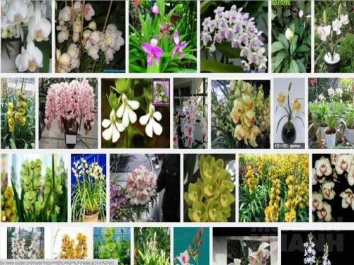 Kinh nghiệm kích thích hoa địa lan nở theo ý muốn