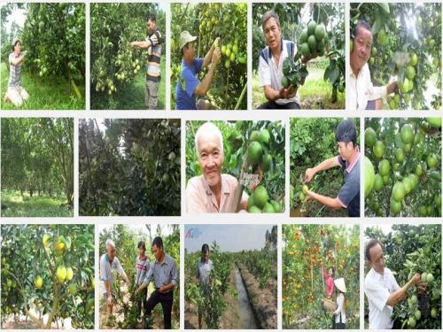 Hướng dẫn kỹ thuật trồng Cam Xoàn, 66, Mai Tâm, Nông Nghiệp Nhanh, 31/10/2016 11:30:10