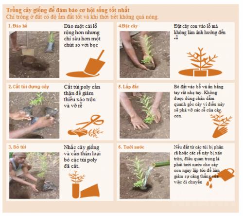 Kỹ thuật trồng cây xuống hố