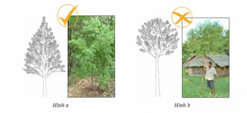Hướng dẫn cắt tỉa cây