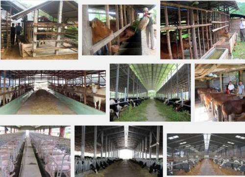Hướng dẫn kỹ thuật làm chuồng bò