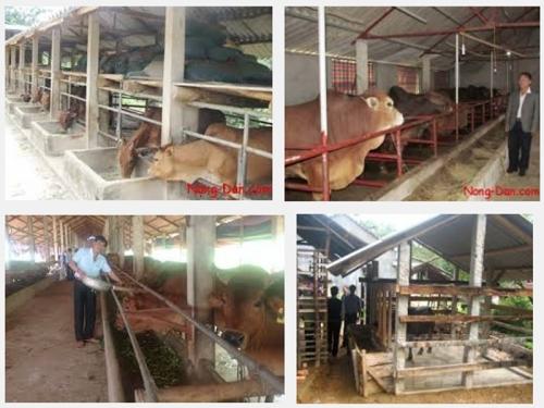Hướng dẫn kỹ thuật làm chuồng trại nuôi bò, 168, Mai Tâm, Nông Nghiệp Nhanh, 09/11/2016 16:35:01