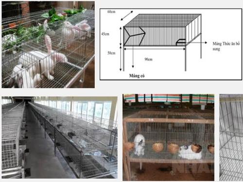 Hướng dẫn kỹ thuật làm chuồng nuôi thỏ, 171, Mai Tâm, Nông Nghiệp Nhanh, 10/11/2016 09:59:36