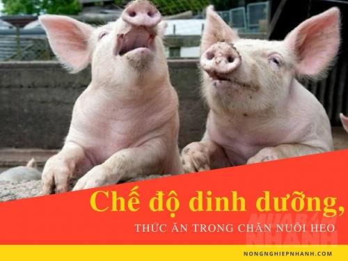 Chế độ dinh dưỡng, thức ăn trong chăn nuôi heo, 189, Mai Tâm, Nông Nghiệp Nhanh, 17/02/2017 15:25:57