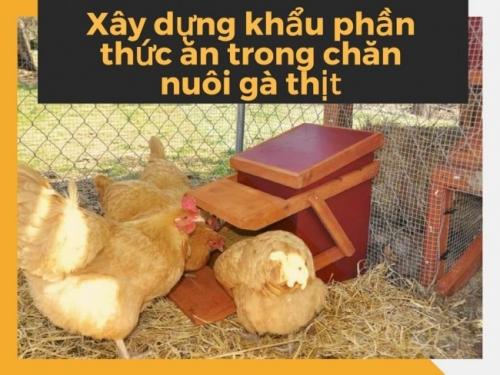 Xây dựng khẩu phần thức ăn trong chăn nuôi gà thịt