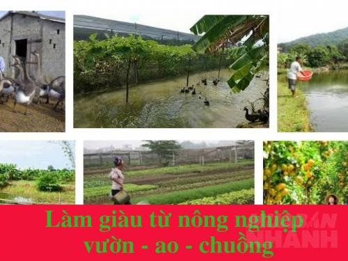 Những cách làm giàu từ nông nghiệp hiệu quả nhất, 193, Phương Mai, Nông Nghiệp Nhanh, 15/03/2017 16:56:14
