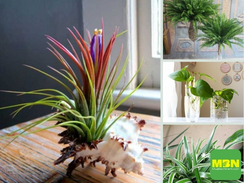 Nông Nghiệp Nhanh tư vấn cây trồng trong nhà dễ sống cho không gian nhà, 213, Hải Lý, Nông Nghiệp Nhanh, 09/03/2021 11:26:28