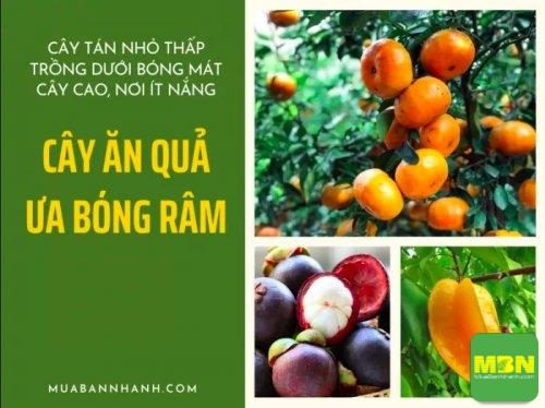 Các cây ăn quả ưa bóng râm, mang lại hiệu quả kinh tế kép, 209, Huyền Nguyễn, Nông Nghiệp Nhanh, 22/06/2020 11:49:57