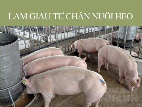 Làm giàu từ chăn nuôi heo, 187, Mai Tâm, Nông Nghiệp Nhanh, 17/02/2017 15:42:36